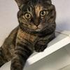 【健康】猫のトイレ事情 ウンチは健康のパラメーター