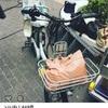 ドラマ「カンナさーん!」渡辺直美さんがスーパー主婦!カンナさんの自転車はこれだ!