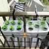 「プランター掛け」を使って水耕栽培装置を手すりに移動。これで歩きやすくなりました