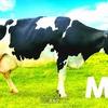 ニンテンドースイッチ 1-2-Switch Milk (ミルク)