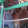 新たに馬を飼い始める