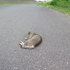 6月5日 荒川沿いを堀切まで 猫さま歩き とその情景