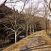 気仙沼の桜並木