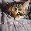 カサついた秋のココロをほぐす3冊+手元に置きたい癒しの猫漫画3冊