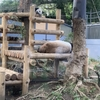 上野動物園 シャンシャンに会いに行って来た
