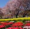 戸川公園のチューリップフェアと箱根スイーツコレクション2019