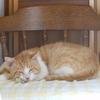 イクメン猫ダイちゃんは、『進化した猫』だった。