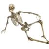 本を読んでも覚えれなかった解剖学が90分で!?一般の方向け楽しい勉強会【全9回:ZOOM】