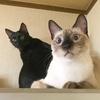 冷蔵庫の上に乗ってくつろぐ子猫の兄弟【よもぎ/なぎ】