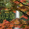 日比谷公園の~青い空と絶景紅葉~
