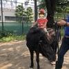都内でポニーに乗馬できる目黒の「碑文谷公園」