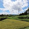 神戸フルーツ・フラワーパーク→光山寺→日西原の棚田。田園風景、ブドウ畑。