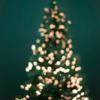 保育園 年長:クリスマス音楽会に行ってきました