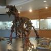 【古生物スポット紹介】おがの化石館