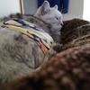 愛猫 手術の朝