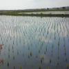 大嘗祭のお米を作る田んぼが決まりました。