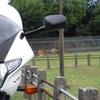 VTR-Fで奈良公園