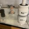 室内水槽の黒青竜