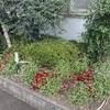 サイコー花壇その後