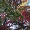 紅葉の名所は神社にあり