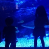 すみだ水族館 新しい水族館ならではのダイナミックでアーティスティックな展示。