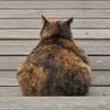 鹿児島と桜島の猫スポットを巡る