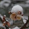 兼六園雪景色「後編」