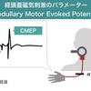 セラピストは必読!経頭蓋磁気刺激の知識:CMEP