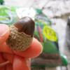 樹木の種まき!ミズナラの実を植えてみる!森からの贈り物