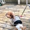 犬連れランチ 絶景、吉祥寺「ソラZENON」へ行ってきました!レビューです。