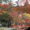 紅葉見頃の宮島へ行って来ました