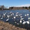 弁天池の水鳥たち