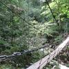 ◆9/16       大鳥池まで②…冷水沢吊り橋~七ツ滝吊り橋
