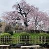 京都も桜シーズンですね!