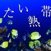映画『冷たい熱帯魚』【ネタバレ感想】園子温監督作品。猟奇的夫婦でんでん&黒沢あすかの狂気は必見!(グロいです。)