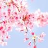 春コスメを使った桜メイク