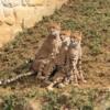 2歳児が楽しめた「多摩動物公園」の見どころ