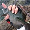夏磯は数釣りを楽しみながら、サイズアップを目指すのが面白い