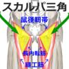 大腿三角(スカルパ三角)の構成要素の覚え方・語呂合わせ