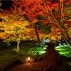 京都・嵐山 - 宝厳院 獅子吼の庭 紅葉ライトアップ
