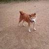 老犬ホーム情報公開。