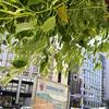 ★木と葉っぱ