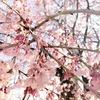 春なのに「だるい」原因と、2つの改善法