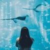 【太地町】イルカは食べてはいけないのか。イルカ漁から肉食について考えた。