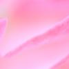 スーパーマクロで見る花