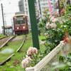 バラと都電と緑の柱