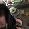 本日の煌奈ちゃん、だっこ皿洗い