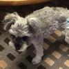 #愛犬ラブ。17回目の月命日を迎えて・・・。🌈