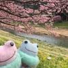 2017/2/22 みなみの桜と菜の花まつり その③ (°∀°)春がカレンダーを追い越してきた!