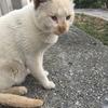 禁断のご近所猫物語